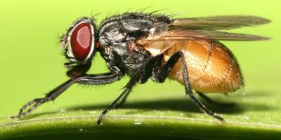 disinfestazione-zanzare-milano